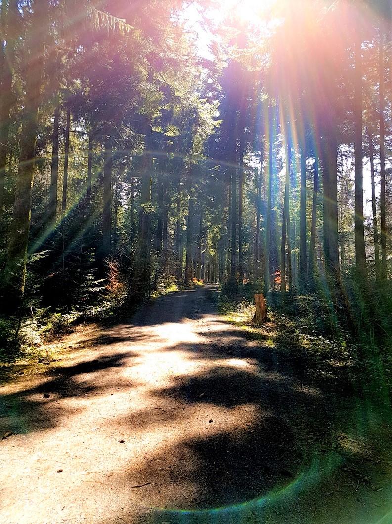 Promenade consciente en nature